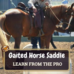 Gaited Horse Saddle Featured