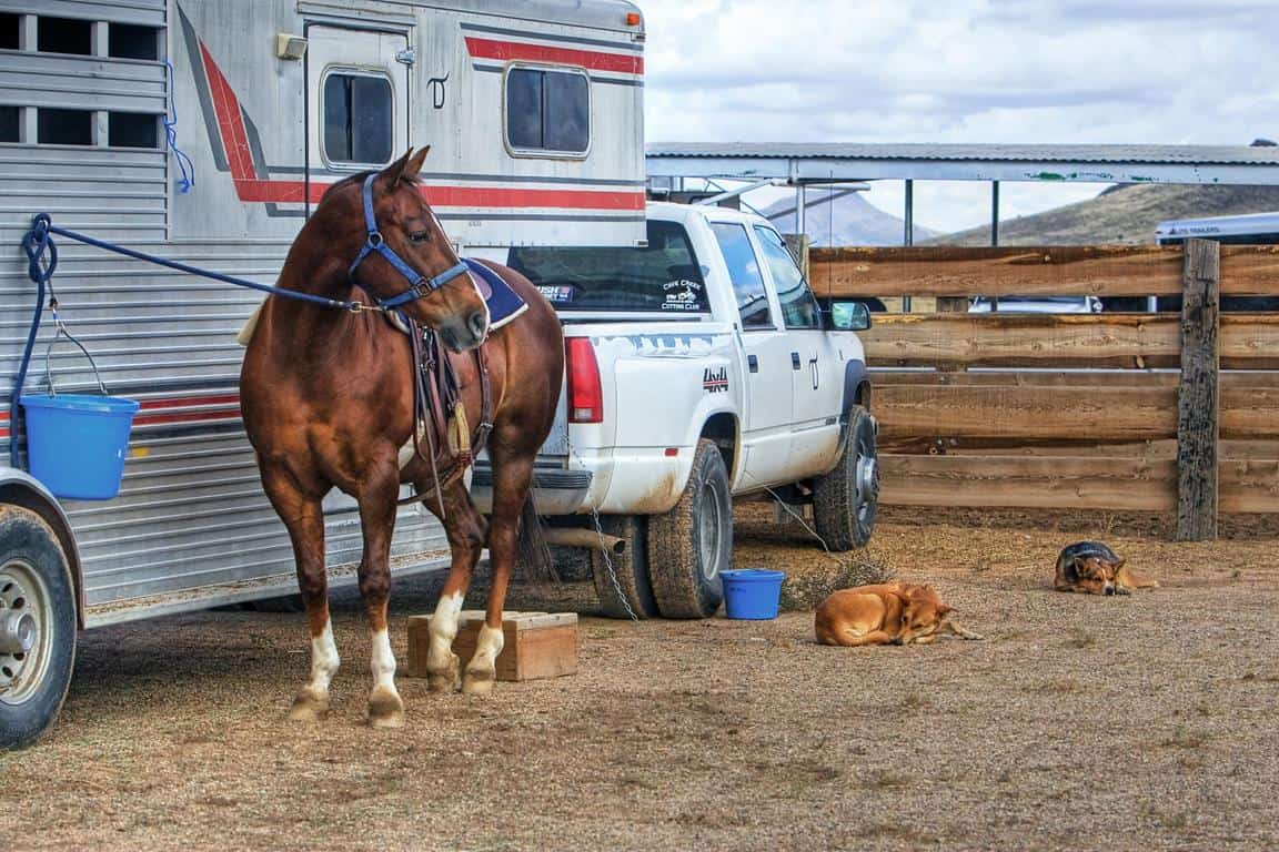 Horse Trailer Weight