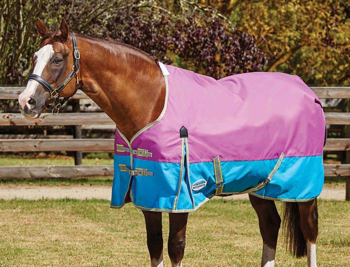 Turnout Sheets For Horses