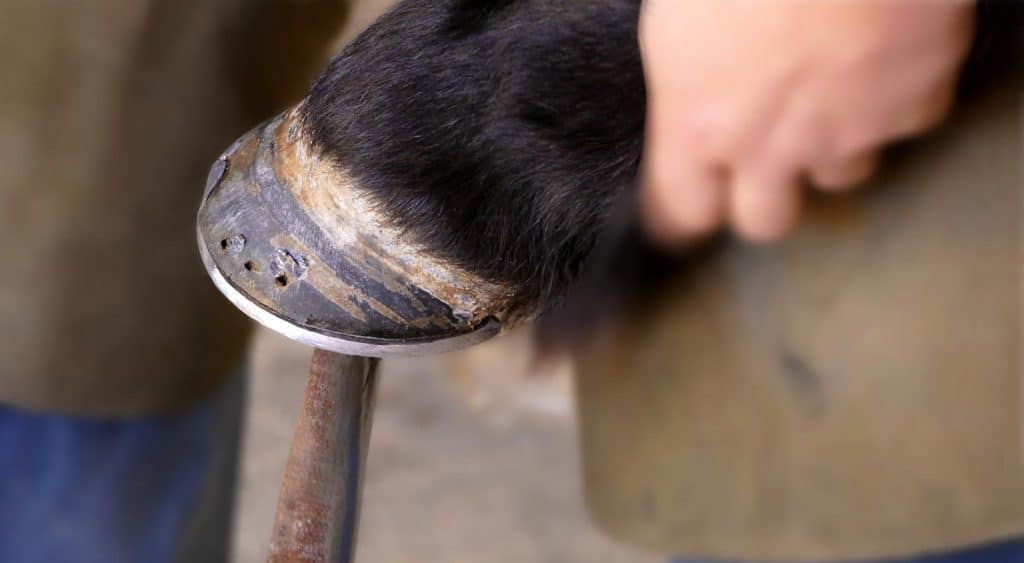 Why Do Horses Need Shoes?
