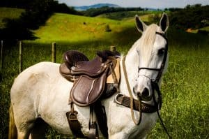 What Color Saddle Pad Looks Best On My Horse?