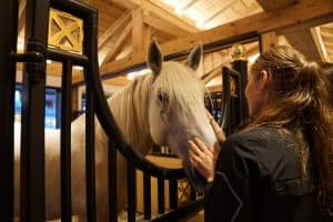 Horseback Riding On A Budget - Getting The Most For Less