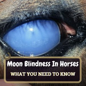 Moon Blindness Featured