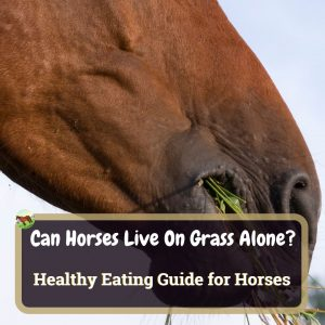 Can Horses Live On Grass Alone